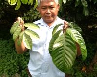 Increase Foliage & Improve Yield