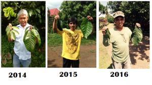 Big leaves 2014-2016