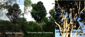 Before & After trtmt
