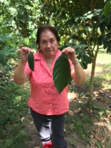 Mam Lita Big Leaves