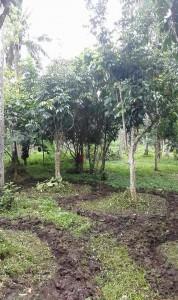 soil rehab